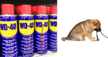 WD40_puppies